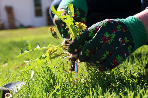 6 Proven Tips to Get Rid of Weeds from Your Lawn
