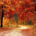 Fall, Autumn, Red, Season, Woods, Nature